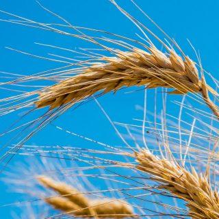 【ルーナサ】ケルトの夏の収穫祭